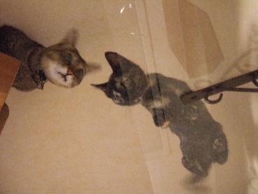 2010_0108猫0034.JPG